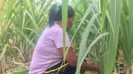 A female farmer crouched working in her field